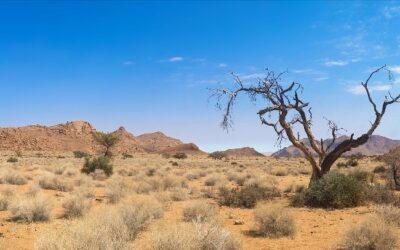 Lenten Yoga Series, Week Two: The Desert